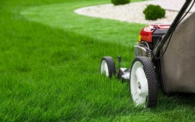 5 Ways to Grow a Beautiful Lawn that Lasts the Whole Summer