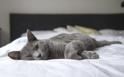 5 Tips and Tricks for Cleaning a Home With Pets